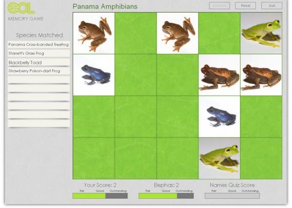 Amphibian memory Game