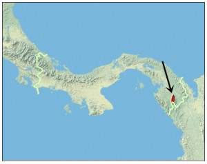 Atelopus glyphus range map