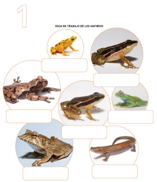Amphibian identification worksheet