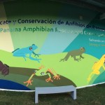 Gamboa Amphibian Research and Conservation Center