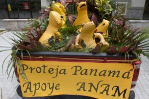 Golden Frog Day float_Brian Gratwicke