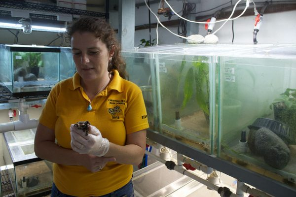 Heidi Ross Director of EVACC with colony of Anotheca spinosa