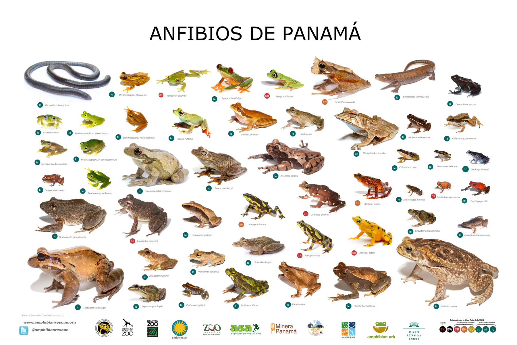 biodiversity amphibian rescue and conservation project