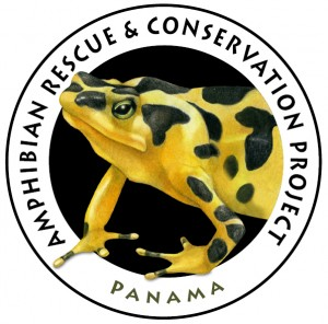 amphibian_rescue_project-300x296