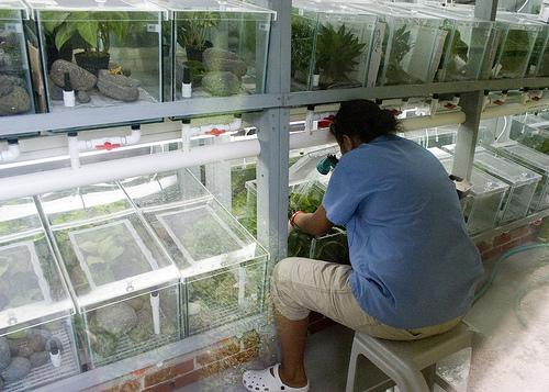 El Valle Amphibian Conservation Center (EVACC)