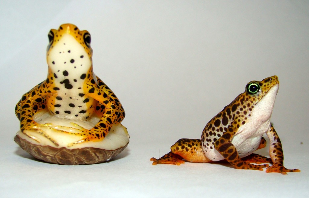 Hand-carved frog taguas by Lanky Cheucarama