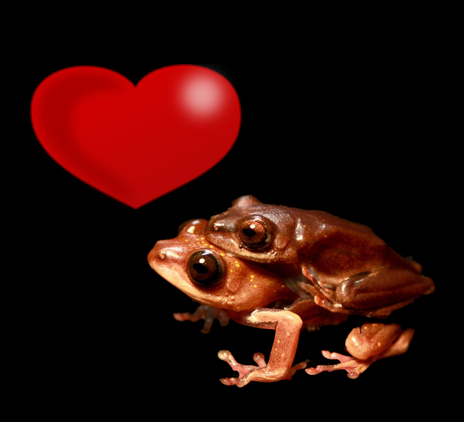 Frog Love Amphibian Rescue And Conservation Project