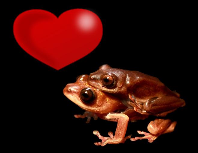 Valentine's frogs