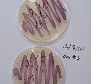 Pure cultures of purple bacteria, the purple comes from the anti-fungal chemical violacein.